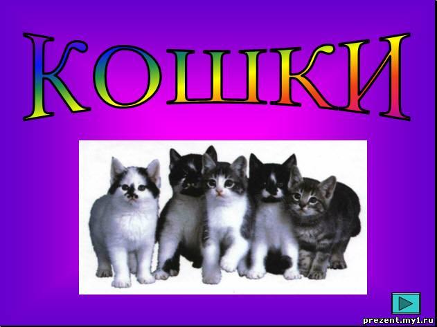 презентация про кошек с картинками
